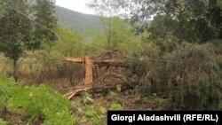 სტიქიის შედეგად დაზიანებული ხეები