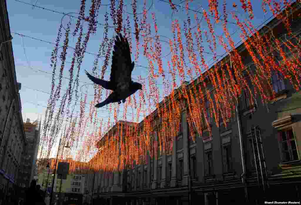 A pigeon flies under street illuminations at sunny morning in the center of Moscow. (Reuters/Shamil Zhumatov)