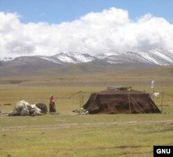 د تبت کوچیانو خپله کېږدۍ په زرغون څړځای کې اړولېده