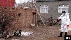 """В Турции зафиксирована очередная вспышка """"птичьего гриппа"""" - в граничащей с Арменией провинции Агдыр."""