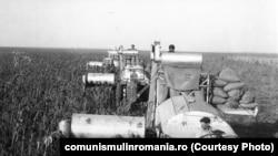 Agricultură în Băragan, în anii 1980.