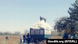 Uzbekistan - cotton 2017