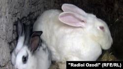 Психологически сложно было поверить в то, что кролик останется живым после того, как его организм нагреют до температуры свыше 43 градусов