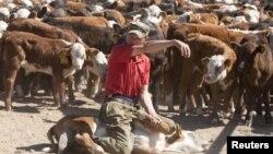 Работник фермы крупного рогатого скота. Иллюстративное фото.