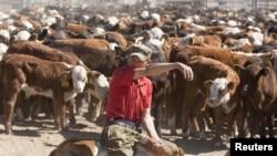 Работник животноводческой фермы. Иллюстративное фото.