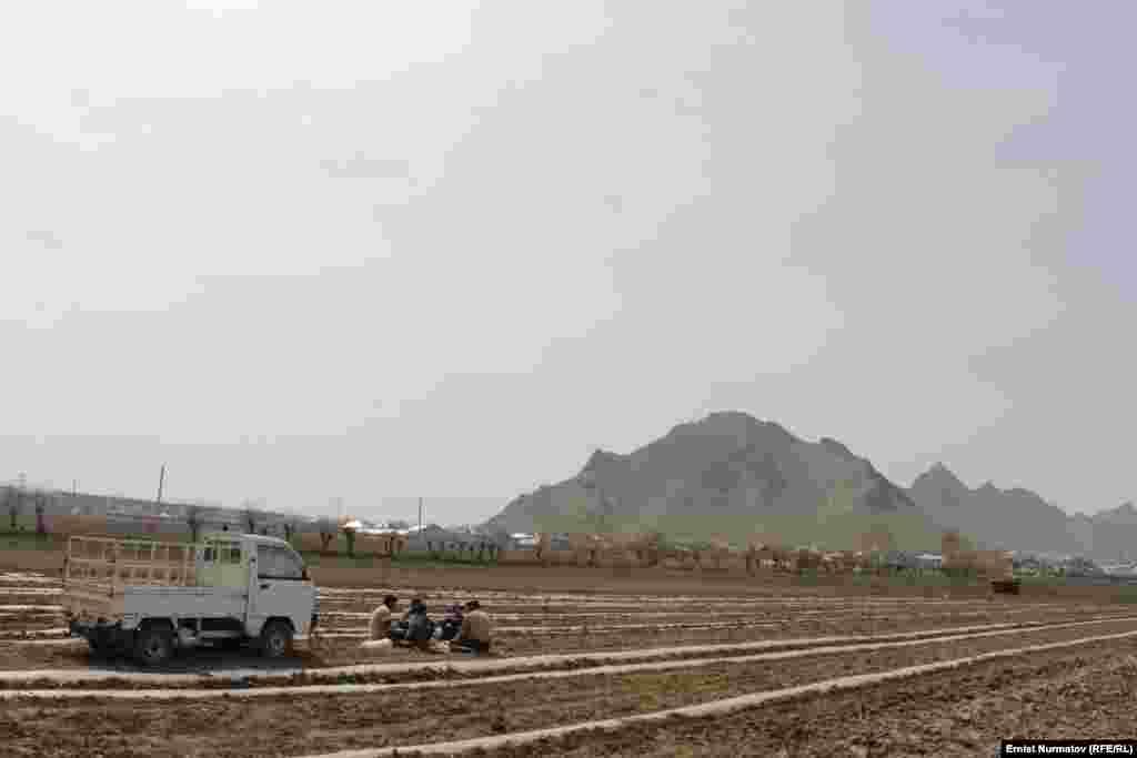 По состоянию на 30 марта в Ошской области весенняя вспашка выполнена на площади 25,2 тыс.га, что составляет 28.3 процента