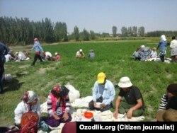Сотрудники и работники бюджетных организаций в Самаркандской области обедают в поле после сбора хлопка, 17 сентября 2017 года. Фото отправлено мобильным репортером «Озодлика».
