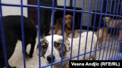 Azil za pse u Beogradu, foto: Vesna Anđić