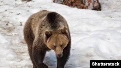 Ведмідь Шатун