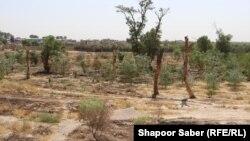 آرشیف، خشکسالی در افغانستان