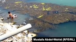 تلوث في مياه نهر الهندية في كربلاء