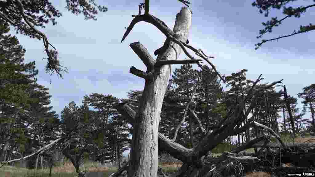 Дерево, що впало від вітру
