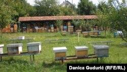 Pčelinjak Bogdana Novakovića, Rudo