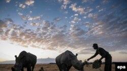 Дикие носороги в 200 километрах от Найроби, Кения. 18 февраля 2015 года.