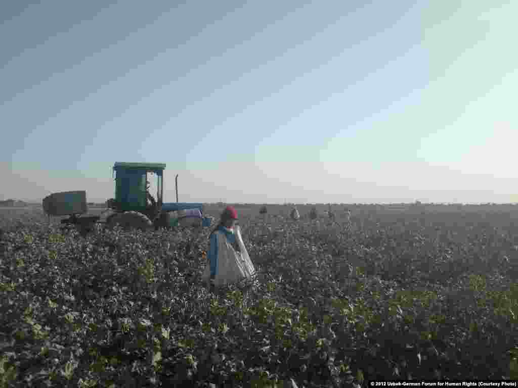 Defoliants are sprayed while workers harvest cotton nearby.