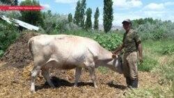 Остров Калашникова: фермер борется с рекой за свою землю, но природа побеждает