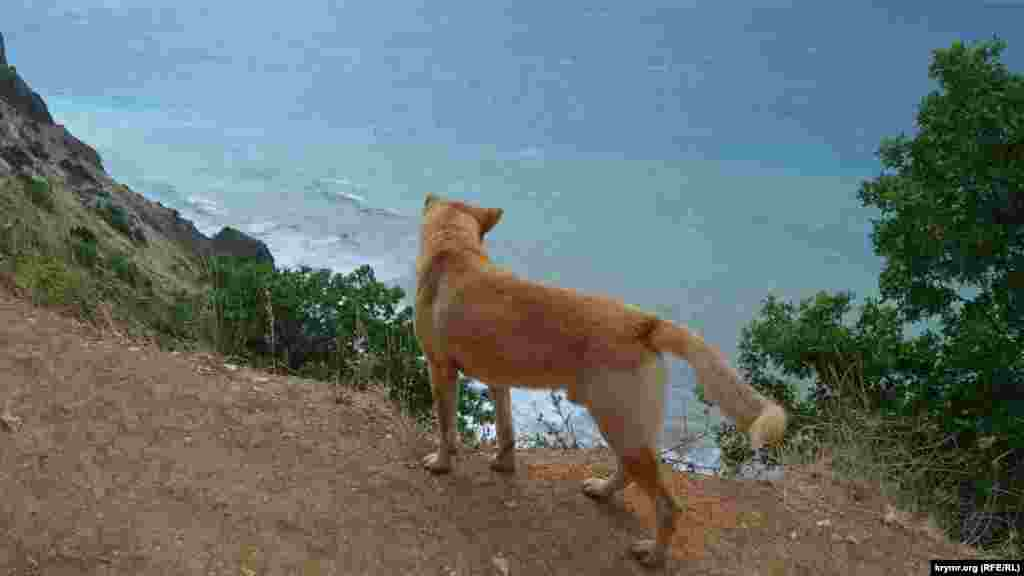 Пес слушает, как шумит море