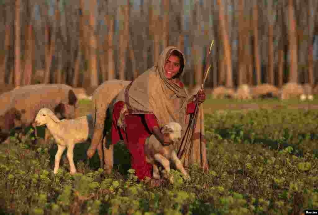 A girl tends her sheep in a field in Nowshera, Pakistan. (Reuters/Fayaz Aziz)