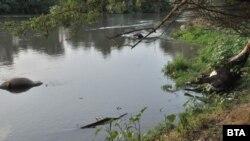 В понеделник 28 крави починаха внезапно след водопой от канал на река Марица