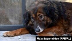 В столице, согласно данным Агентства по мониторингу животных, на сегодняшний день проживает от 43 до 50 тысяч бездомных собак