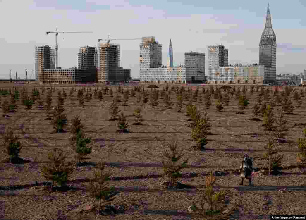 A person walks among young trees near the construction site of new apartment blocks in St. Petersburg, Russia. (Reuters/Anton Vaganov)
