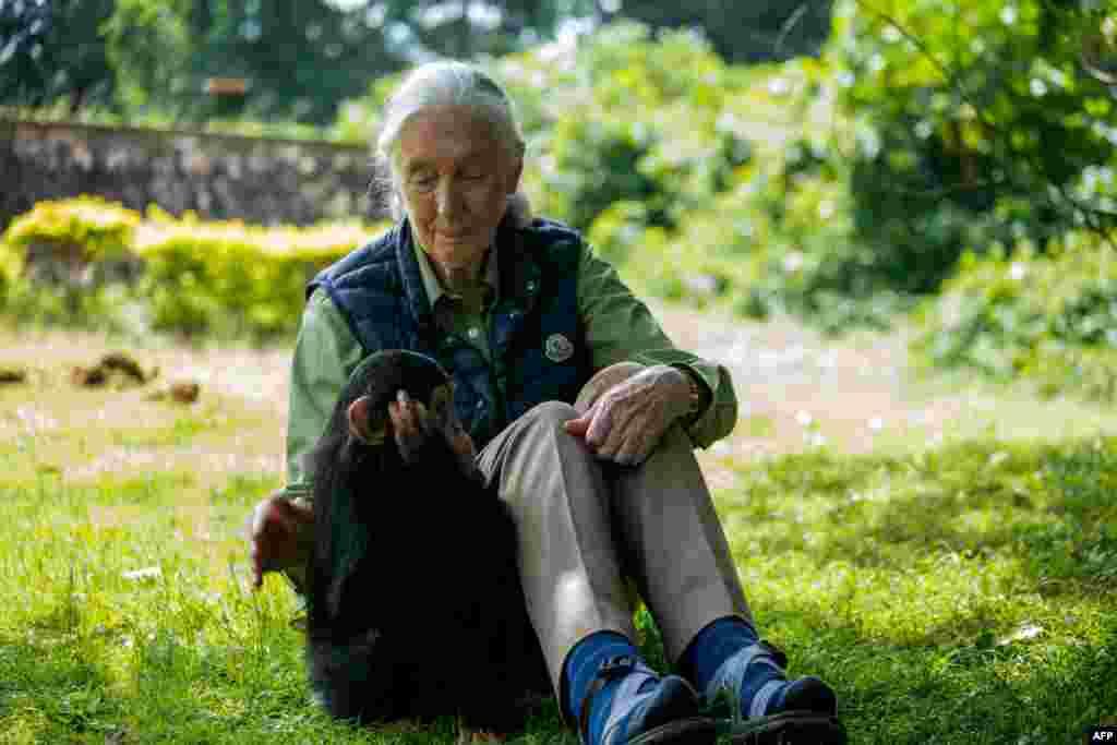Jane Goodallangoletológus,antropológusésprimatológus, acsimpánzokszociális és családi életének legismertebb kutatója. 2003-ban vehette át a díjat ugyanabban a kategóriában, mint Karikó Katalin.