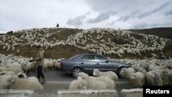 После перехода Ленингорского района под юрисдикцию Цхинвала отгонное животноводство столкнулось с новыми сложностями