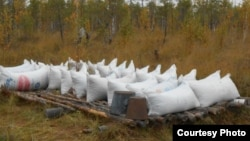 Себертатарлар мүк җиләген җыйгач, кышка кадәр сазлыкларда калдыра