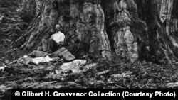 "Gilbert H. Grosvenor, first full-time editor of ""National Geographic"" magazine, awakens after a night spent beneath a giant sequoia tree during his first trip to California's Sierra Nevada Mountains in 1915. After this visit he lobbied for passage of a bill that created the National Park Service in 1916."