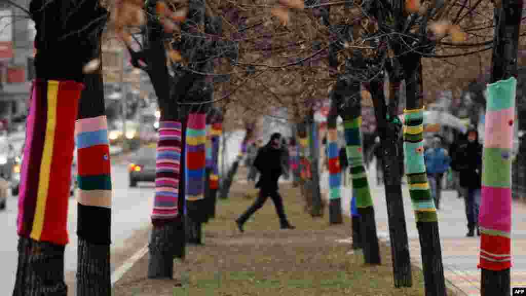 Dekorimi i pemëve në Prishtinë...