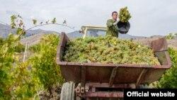 Виноград в Крыму. Иллюстрационное фото