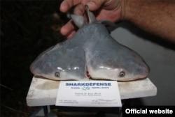 © Patrick Rice, Shark Defense/Florida Keys Community College