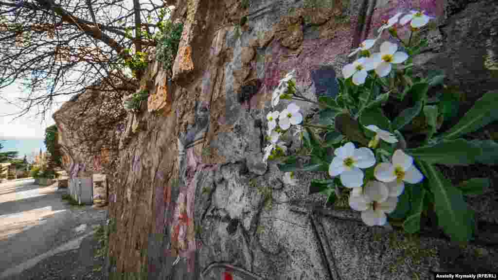 Примула знайшла своє місце під сонцем на вертикальній стінці