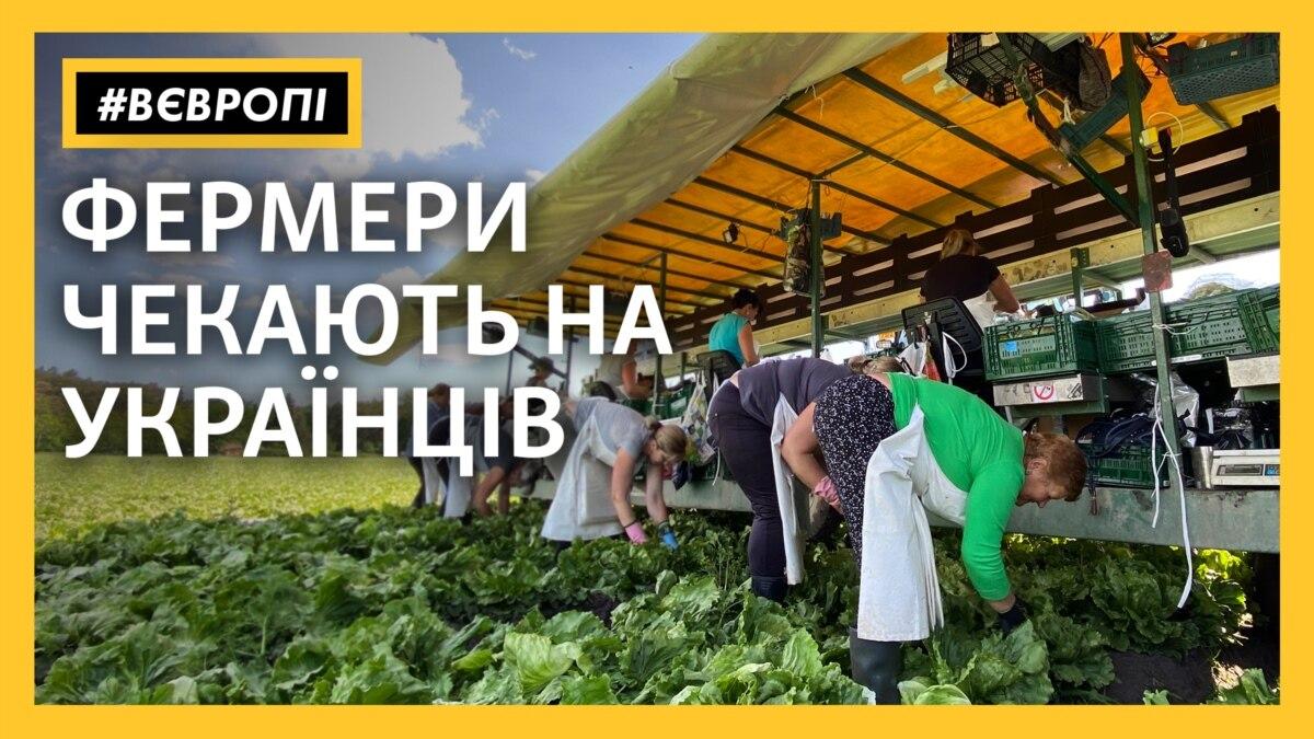 «Без украинцев будет катастрофа» – чешские фермеры ждут гастарбайтеров