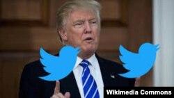 Ilustrim i presidentit Trump me simbolin e rrjetit Twitter