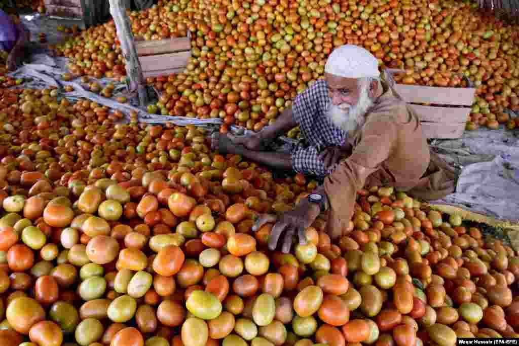A man sorts tomatoes at a vegetable market in Larkana, Pakistan. (epa-EFE/Waqar Hussnain)