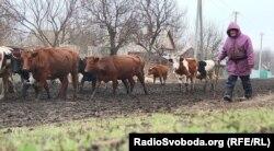 Місцевий житель Валерій йде пасти худобу