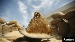 A laborer winnows rice at a marketyard at Bavla, west of the western Indian city of Ahmedabad.