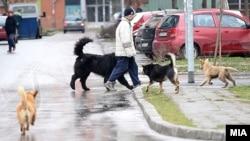 Улични кучиња во Скопје.