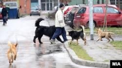 Улични кучиња.
