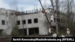У покинутому місті Прип'яті володарює природа