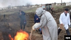 Пока из 13 субъектов юга России вирус Н5N1 выявлен лишь в Краснодарском крае