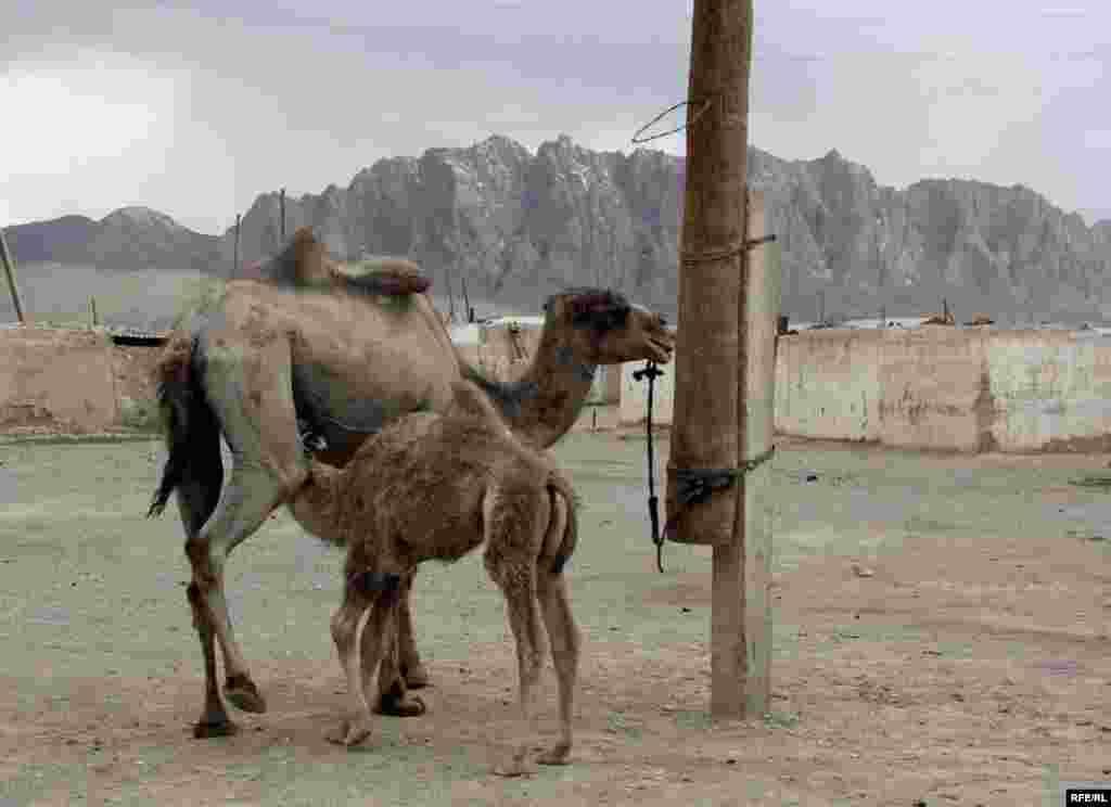 Восточный Памир: у озера Рангкуль... #30