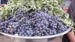 În acest an, seceta și pandemia au secat vinul din podgoriile moldave