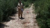 A plainclothes police officer indicates the bloody spot where popular Pakistani blogger and social-media activist Muhammad Bilal Khan was killed in Islamabad on June 16.