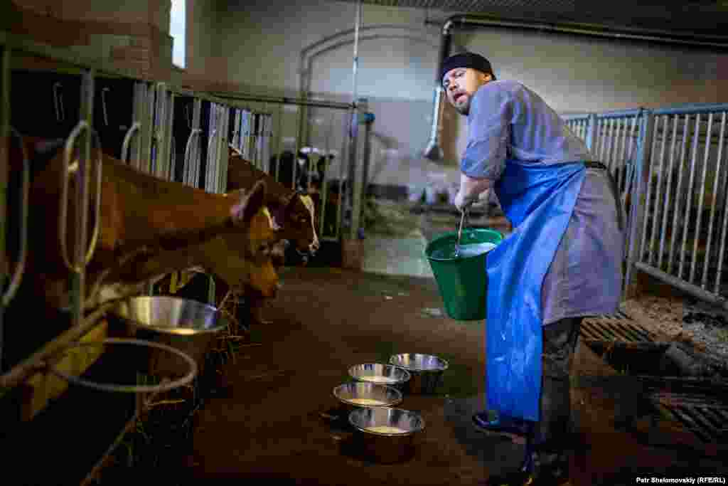 A monk feeds calves with fresh milk on the monastery's farm.