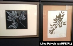 Монотипия Дмитрия Плавинского и лист гербария
