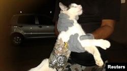 زندانبان ها در برزيل گربه ای را که به فرار زندانيان کمک می کرد دستگير کردند.
