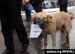 Тұмылдырық кигізілген ит жетектеген адам. Санкт-Петербург, Ресей, 26 ақпан 2012 жыл. (Көрнекі сурет)