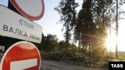 Попытка предотвратить валку Химкинского леса становится все более опасной для его защитников